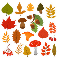Yellow autumn leaves mushrooms and berries fall vector