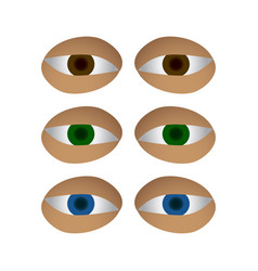 Different colors eyes set vector