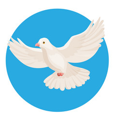 Dove of white color symbol of peace isolated in vector