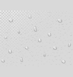water rain drops droplets on transparent wet vector image