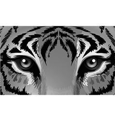 A tiger with sharp eyes vector