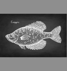 Crappie fish chalk sketch vector