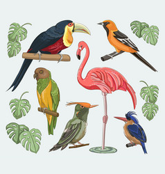 Exotic set birds vector