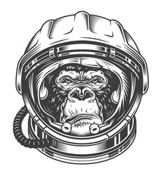 Head gorilla vector
