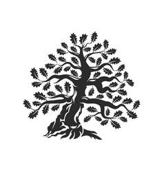 huge and sacred oak tree silhouette logo badge vector image