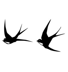 Swallows birds vector
