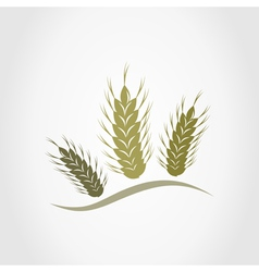 Wheat2 vector image vector image