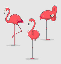 set of pink flamingos bird in different poses vector image vector image
