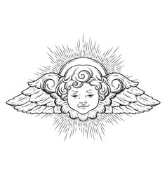 Cherub cute winged curly smiling baboy angel vector