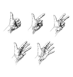 hand counting from one to five vector image