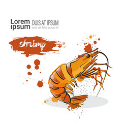 shrimp hand drawn watercolor food on white vector image