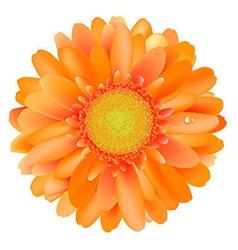 Orange Gerber vector image vector image