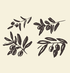 Set ink hand drawn olive tree branches vector
