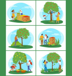 Gardening and farming picking apples in garden vector