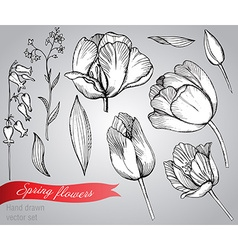 Set of hand-drawn spring flowers tulips vector