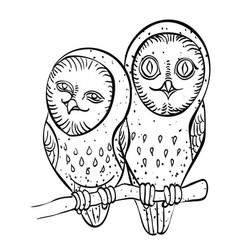 cartoon image of cute owls vector image