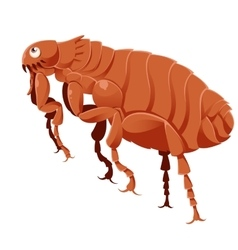 Cartoon Flea vector image