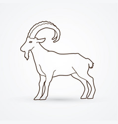 Mountain goat ibex standing vector