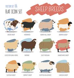 Sheep breed icon set farm animal flat design vector