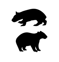 Wombat silhouettes vector image vector image