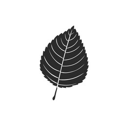 elm leaf icon vector image