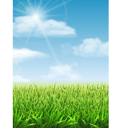 fresh green grass on meadow vector image