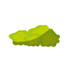 isolated bush cartoon vector image