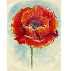 Poppy flowers sketch03 vector