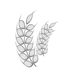 Spikelets of wheat icon black monochrome style vector image