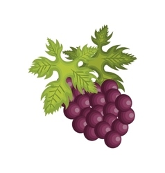 grapes fruit design vector image