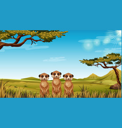 meerkats in african landscape vector image
