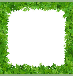 square frame of leaves vector image