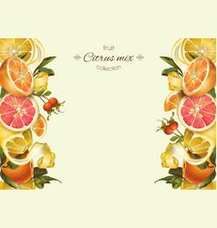 Vintage citrus banner vector