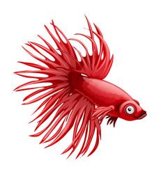 Cartoon red betta fish siamese fighting fish vector