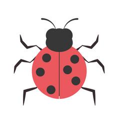 ladybug animal insect garden vector image
