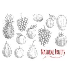 Natural fruits sketches for vegetarian food design vector image vector image
