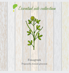 Pure essential oil collection fenugreek wooden vector