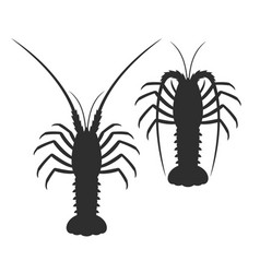 spiny lobster vector image
