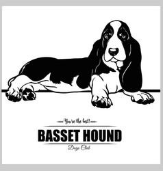 basset hound dog - for t-shirt vector image