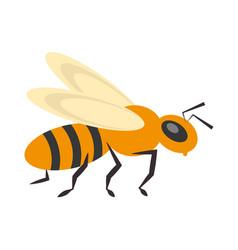 bee insect flower pollen vector image