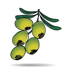 freehand drawing olive icon vector image