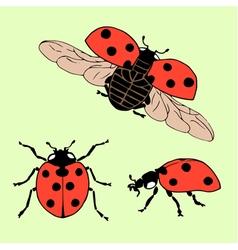Ladybug set2 vector
