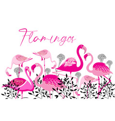 pink flamingos on a white background vector image