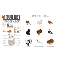Poultry farming infographic template turkey vector