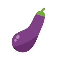 Eggplant or aubergine vegetable isolated vector image