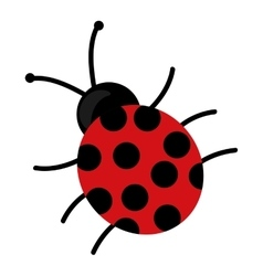 Cute beautiful ladybug isolated vector