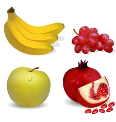 Fruits apple banana grapes and pomegranates vector