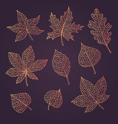 hand drawn autumn set with oak maple leaves vector image