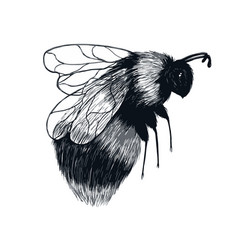 Hand drawn sketch insect bumblebee in flight vector