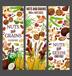 Superfood nuts and healthy gmo free cereal grains vector